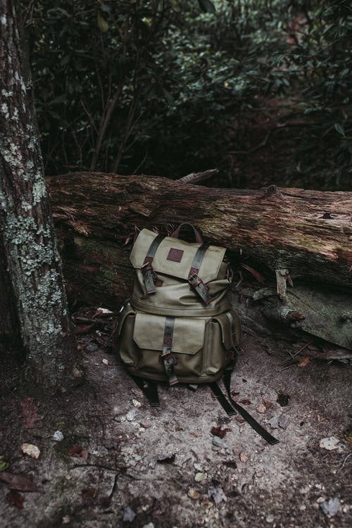 Gray and Black Backpack on Brown Tree Log