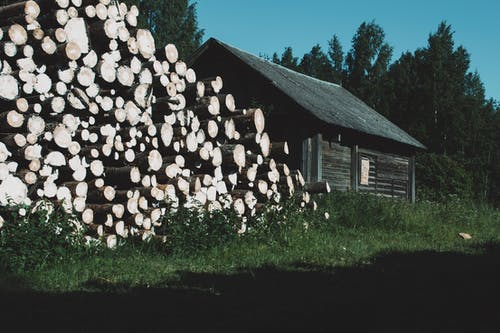 Pile of dry tree trunks on lawn against aged wooden shed and green trees under blue sky