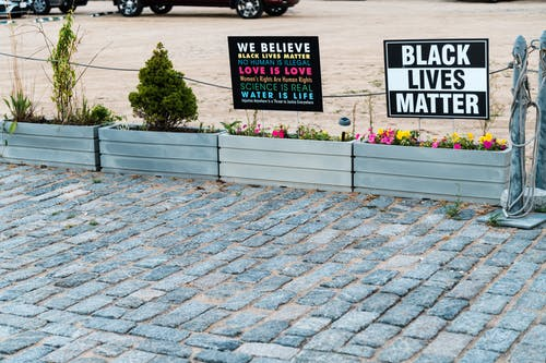 Signboards with Black Lives Matter titles above bright blossoming flowers near shabby pavement in town