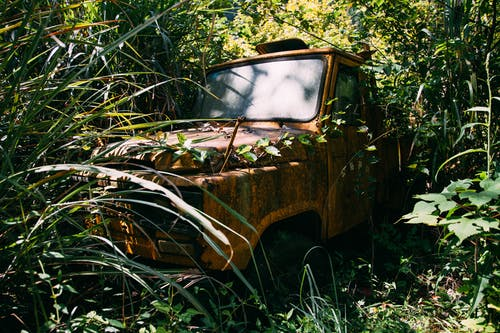 Aged rusty vehicle among grass and trees in forest