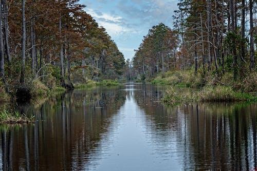 Free stock photo of georgia, okefenokee swamp, wetland