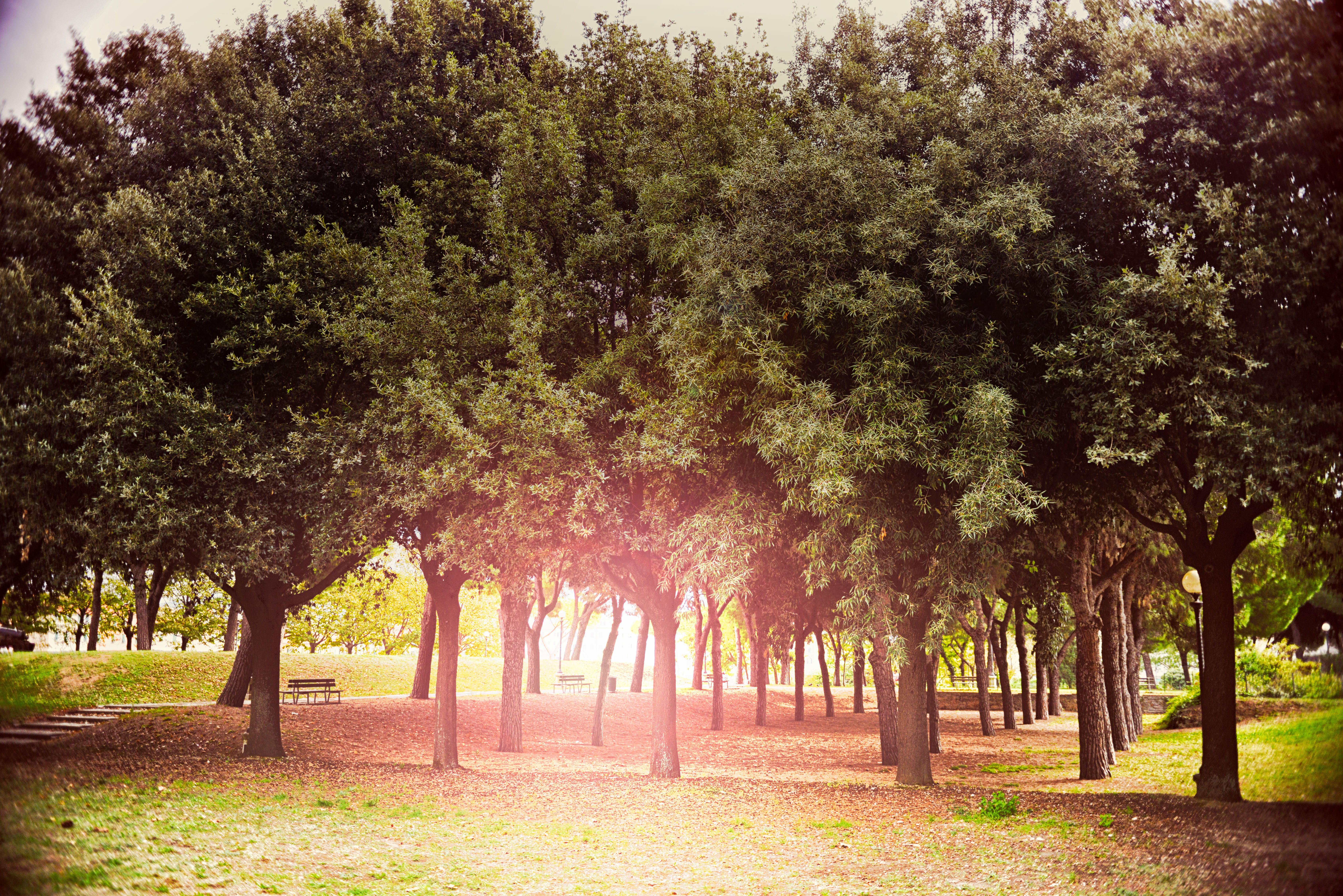 Benches Under Trees