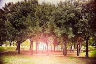 sun, sunshine, trees
