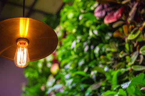 Free stock photo of bulb, garden, hanging garden