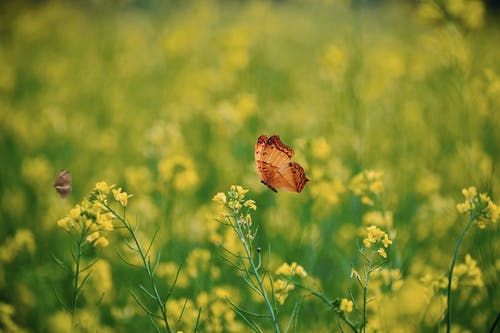 Brown Butterfly Perched on Yellow Flower in Close Up Photography