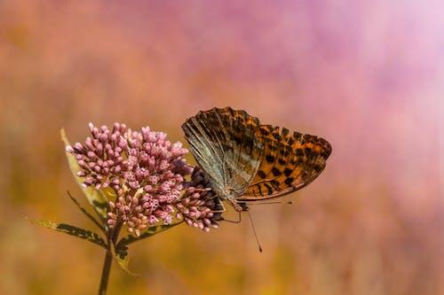 Foto stok gratis binatang, bunga, daun, di luar rumah