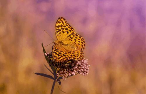 Immagine gratuita di animale, bellissimo, colore, delicato