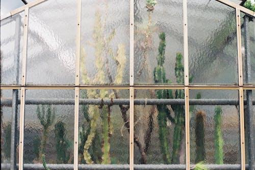 Plants growing behind glass window