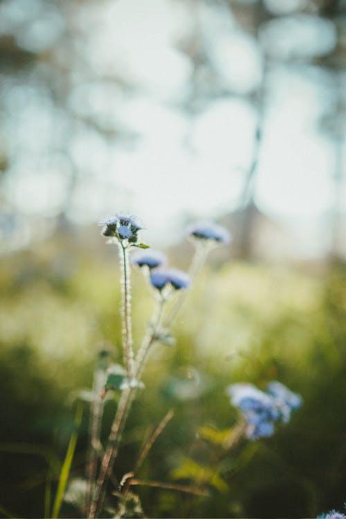 Gratis stockfoto met aroma, biologisch, bloeien