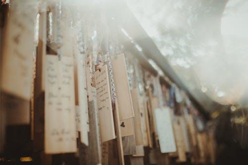 açık hava, ahşap, arka plan bulanık, armoni içeren Ücretsiz stok fotoğraf