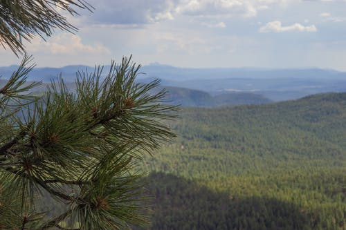 Free stock photo of forest, mountains, Northern Arizona, Vast Forest