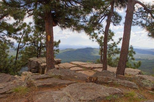 Free stock photo of forest, mountains, Northern Arizona