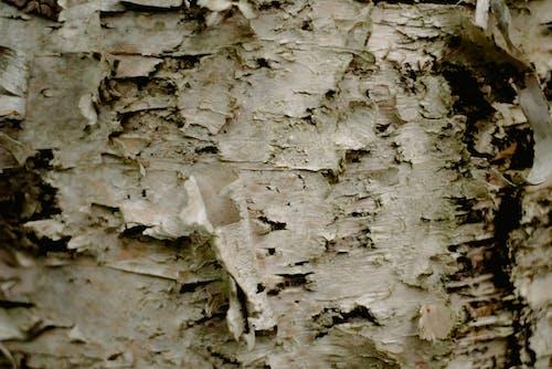 Безкоштовне стокове фото на тему «абстрактний, береза, брудний, візерунок»