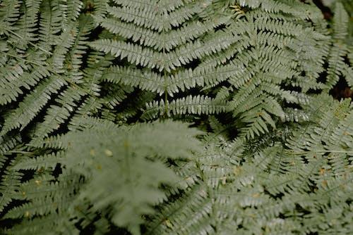 Безкоштовне стокове фото на тему «абстрактний, візерунок, гілка з листям, Деревина»