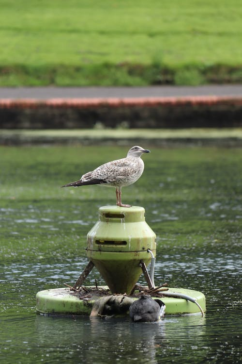 Seagull on buoy in lake water