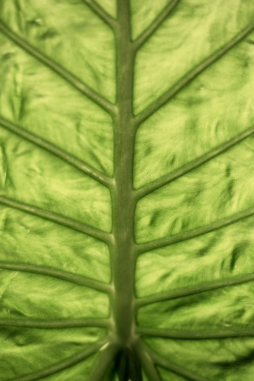 Tropical lush green leaf as background
