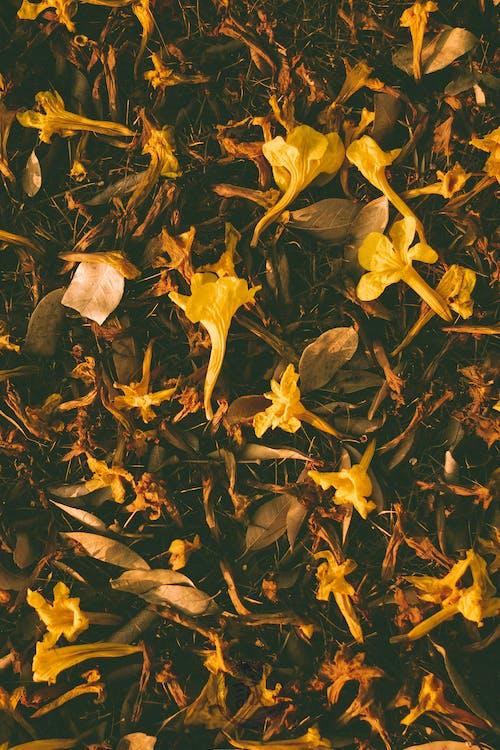 Kostnadsfri bild av 4k tapeter, abstrakt, blad
