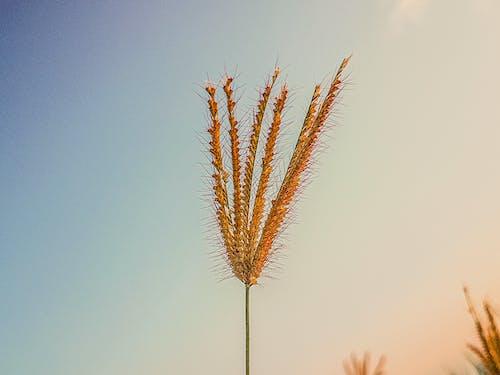 Foto stok gratis bunga, bunga yang indah, hijau