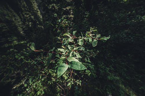 Бесплатное стоковое фото с зеленый, красивая природа, красота в природе, лес