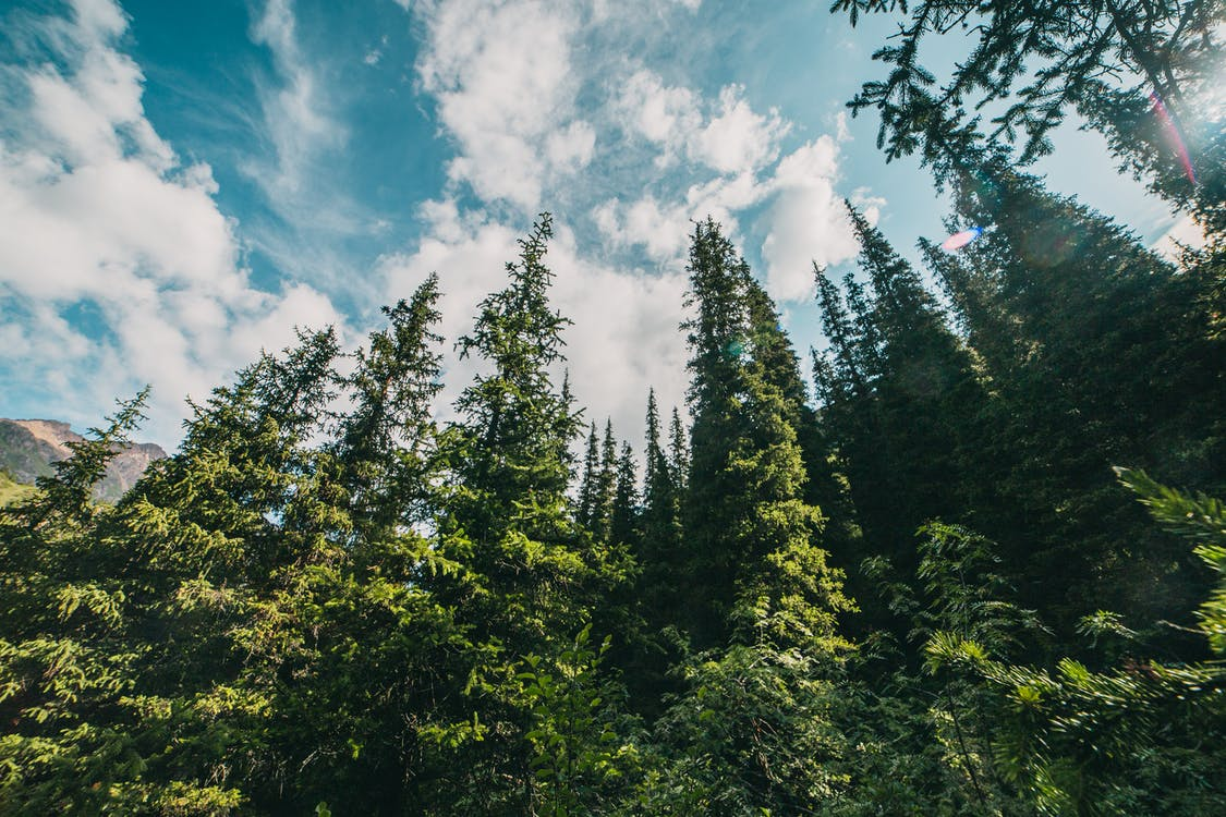Green Trees Under Blue Sky and White Clouds