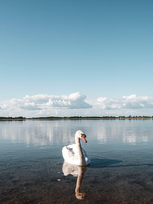Бесплатное стоковое фото с вода, голубое озеро, голубой, животное