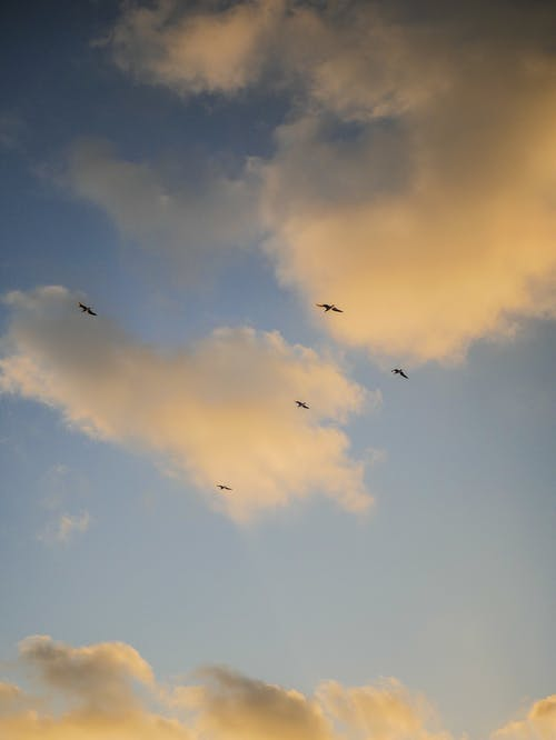 Birds Flying Under Blue Sky