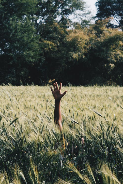 Ilmainen kuvapankkikuva tunnisteilla käsi, kasvu, kenttä, kesä