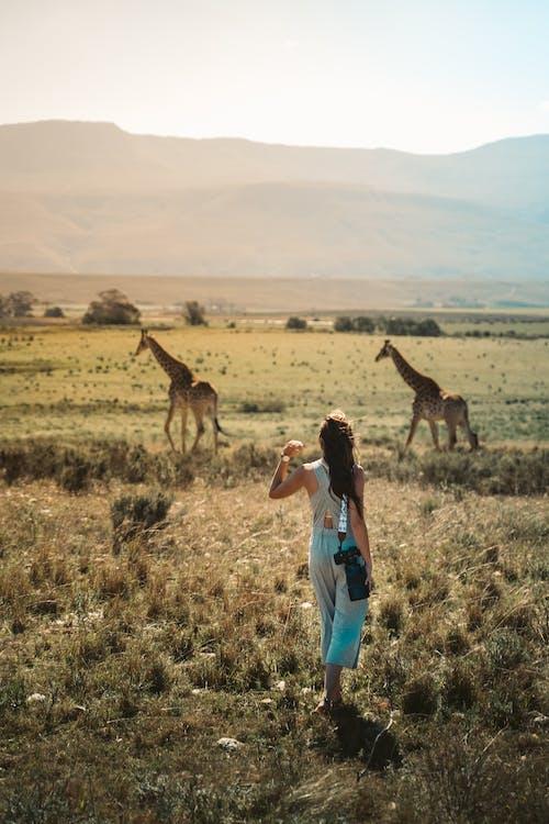 Woman in Blue Denim Jeans Standing Beside Giraffe