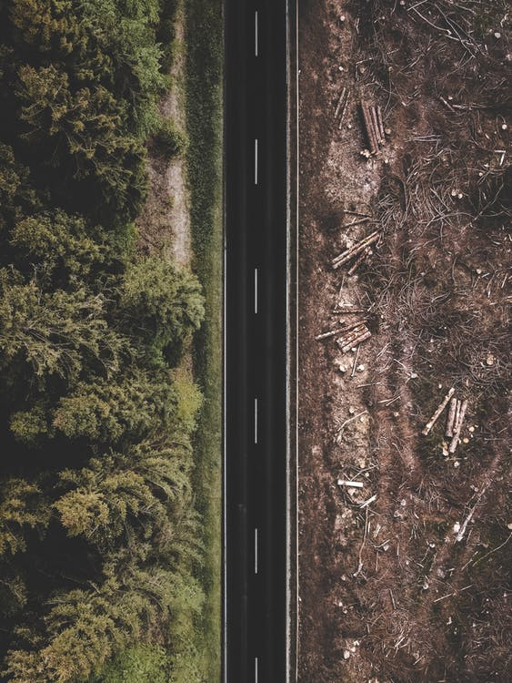 Grüne Bäume Und Brauner Boden