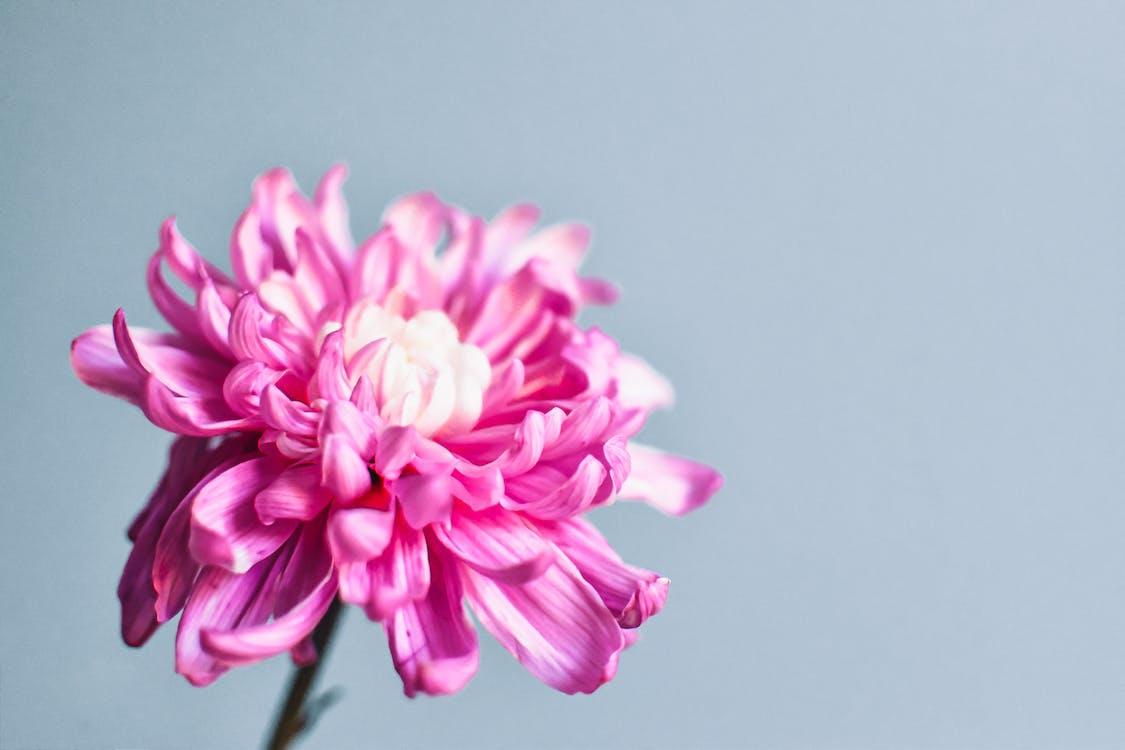 Immagine gratuita di amore, bellissimo, bianco e rosa