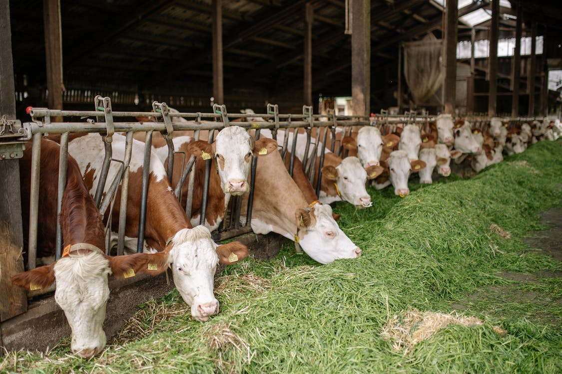 Ingyenes stockfotó állatállomány, csoport, emberek témában
