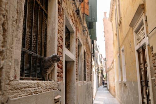 A Cat Peeking Through the Window in the Alleyway
