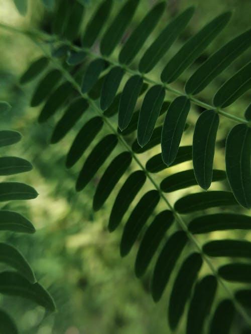 Foto d'estoc gratuïta de a l'aire lliure, biologia, bosc