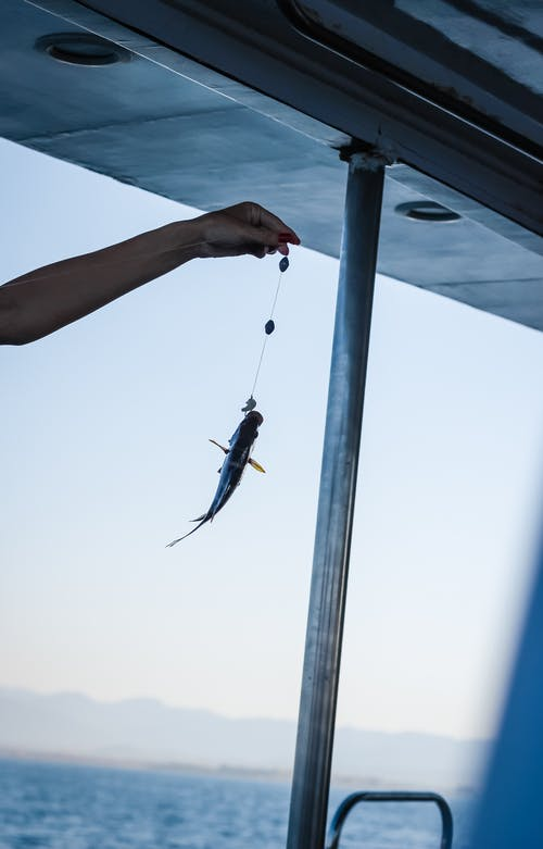 Crop anonymous person holding small fish on fishing line with hook in hand while fishing in sea at daytime