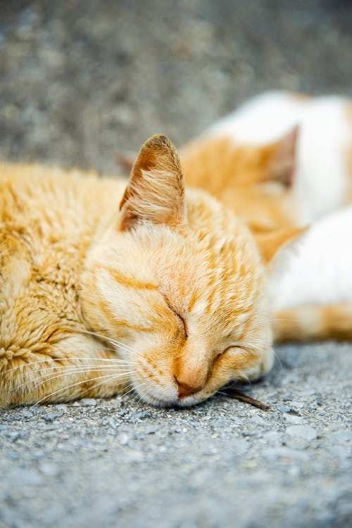 Cute fluffy cats with closed eyes napping on rough gray pavement in daytime