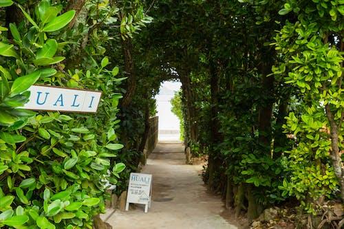 Pathway with inscriptions between greenery trees in urban garden
