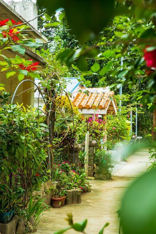 Empty walkway in greenery garden with houses