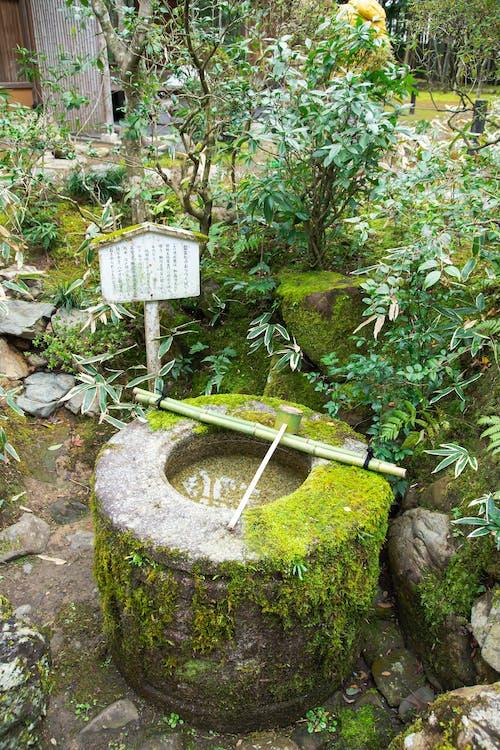 Chậu Rửa Nghi Lễ Truyền Thống Của Nhật Bản Trong Khu Vườn Nhiệt đới