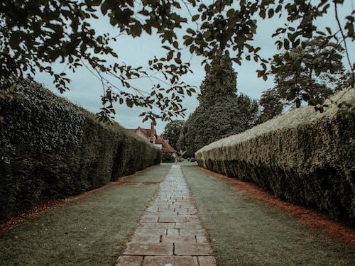 Бесплатное стоковое фото с Аллея, архитектура, дорога, замок