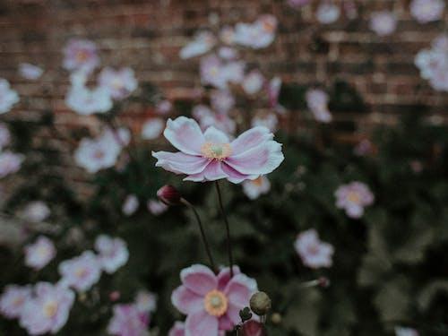 Бесплатное стоковое фото с красивый, лепесток, лето, лист