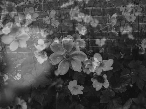 壁紙, 復古, 抽象, 植物群 的 免費圖庫相片