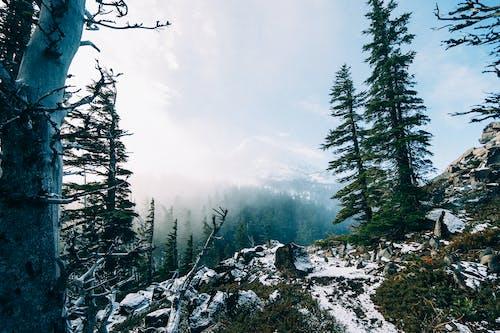 Darmowe zdjęcie z galerii z góry, las, mgła, śnieg