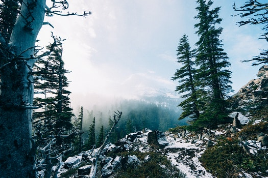Free stock photo of snow, mountains, forest, winter