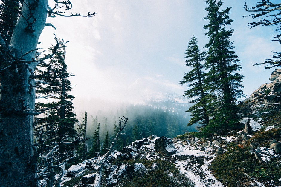 fog, forest, mountains
