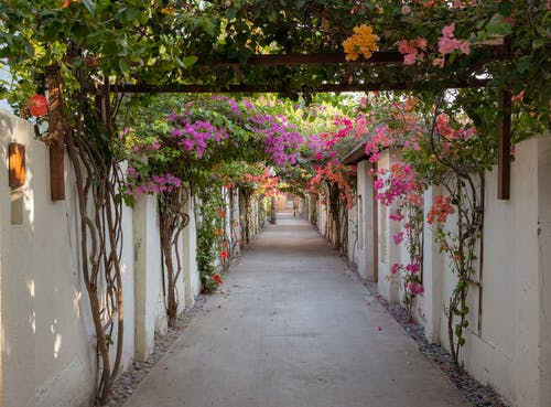 Free stock photo of archway, beautiful street, flower arrangement, flowers
