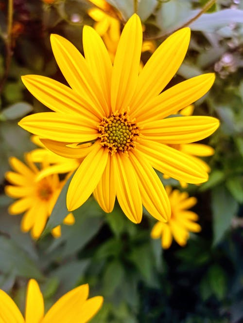 açık hava, alan, ayçiçeği içeren Ücretsiz stok fotoğraf