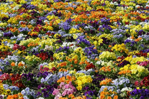 Kostnadsfri bild av bakgrund, blomma, blommig