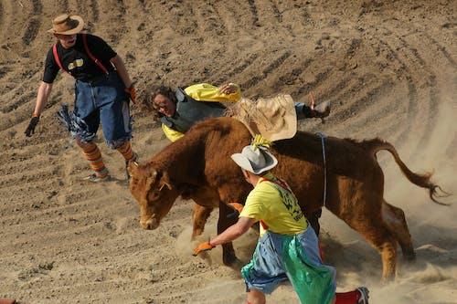 Kostnadsfri bild av action energi, arena, boskap