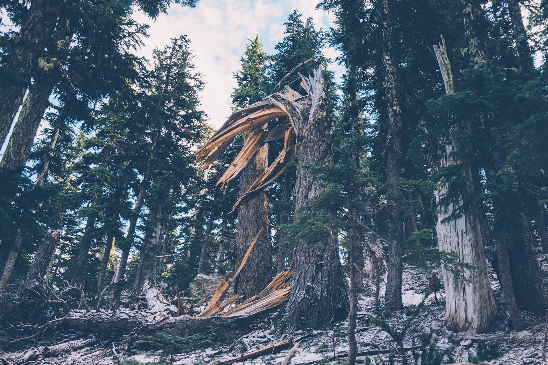Free stock photo of fallen tree