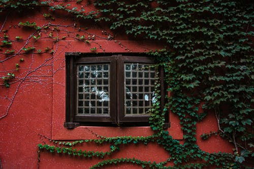 Exterior of aged wall of red house with closed wooden window and green plants
